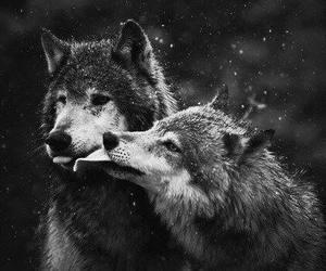 wolf, animal, and kiss image