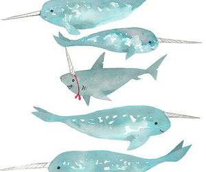 shark, blue, and narwhal image