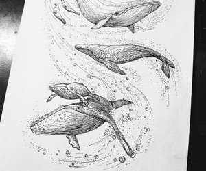 draw, lovely, and whale image