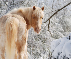 horse, snow, and sweet image
