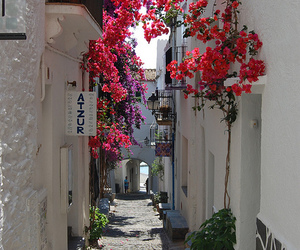 flowers, travel, and street image