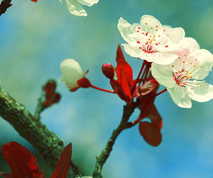 flower, cherry blossoms, and japanese image