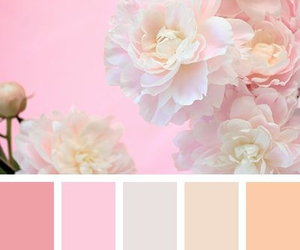 color palette, flowers, and palette image