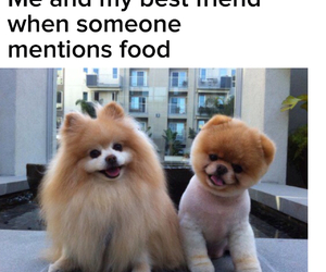 best friend, buddies, and dogs image