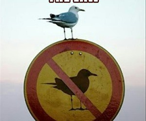 funny, bird, and boss image