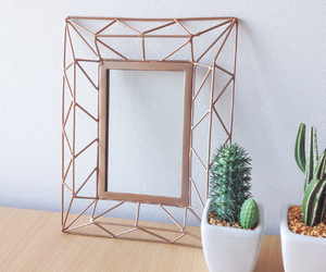 cactus, decor, and room image