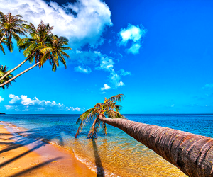 beach, sea, and palm trees image