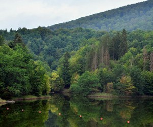 calmness, nature, and summer image