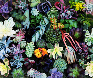 plants, flowers, and nature image