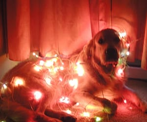 dog, sweet, and light image