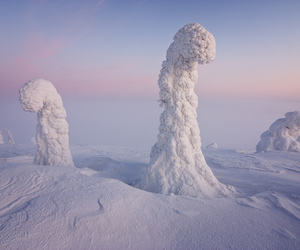 snow, finland, and tree image