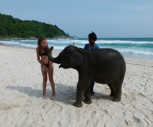 elephant, beach, and summer image