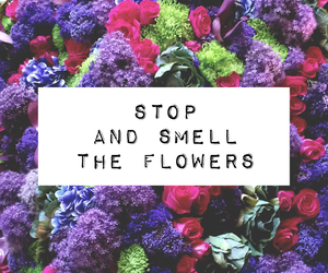 flowers, stop, and quotes image