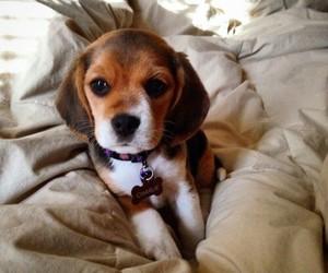 dog, cute, and doggy image