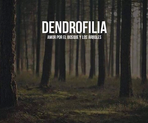 forest, dendrofilia, and tree image