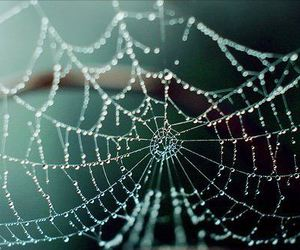 spider, photography, and spider web image