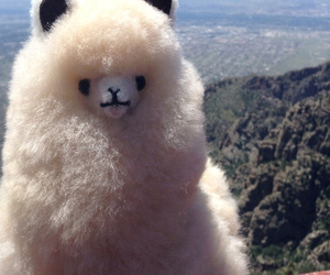 alpaca, funny, and travel image