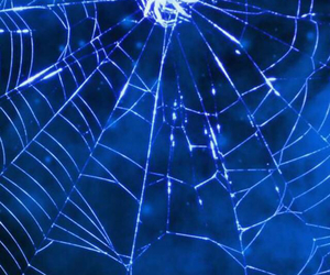 blue, spider, and web image