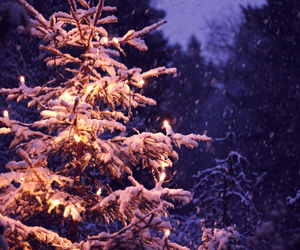 christmas, light, and norway image