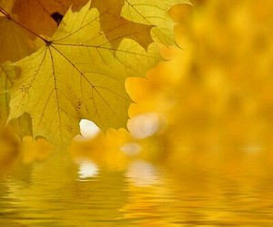 golden and yellow image