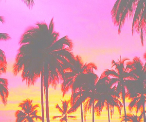 palm trees, orange, and pink image