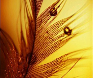 amber, yellow, and golden image
