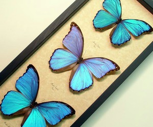 beautiful, blue, and butterflies image