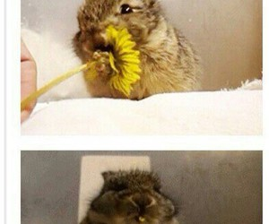bunny, flower, and funny image