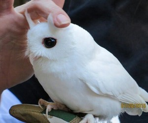 owl, cute, and white image