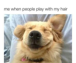 funny, dog, and smile image