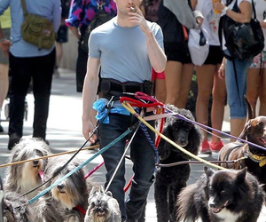 daniel radcliffe, dog, and funny image