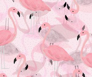 pink, flamingo, and wallpaper image