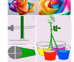 diy, rose, and flowers image
