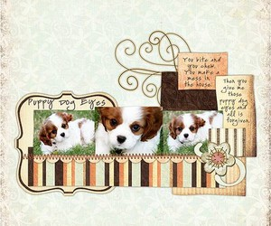 Collage, cute, and puppy image