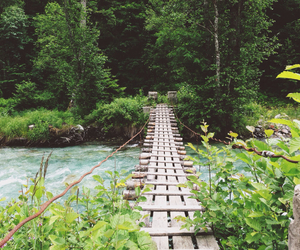 bridge, follow, and forest image