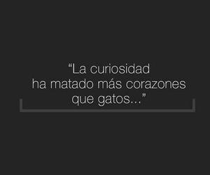 curiosidad, frases, and Gatos image