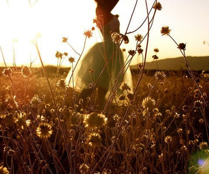 flowers, sun, and dress image