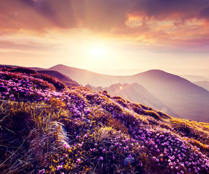 flowers, mountains, and sunset image