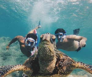 summer, turtle, and sea image