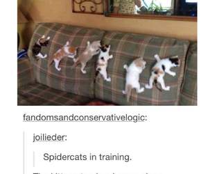funny, kittens, and spidercats image
