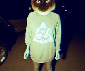 cat, hipster, and vans image