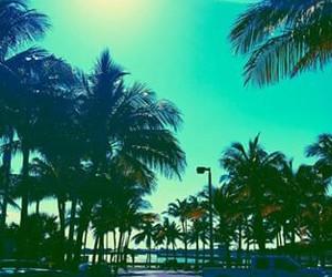 cali, florida, and summer image