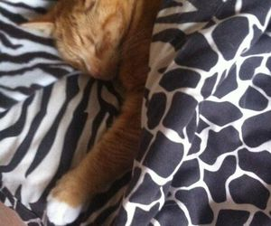 bed, cat, and sleep image