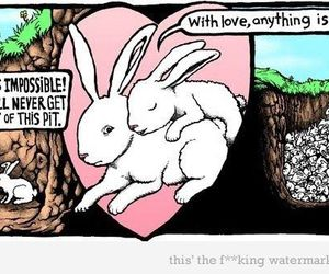 funny, rabbits, and love image