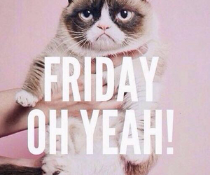 cat and friday image