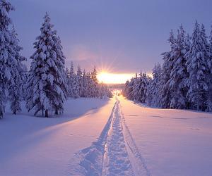 christmas, snow, and sun image