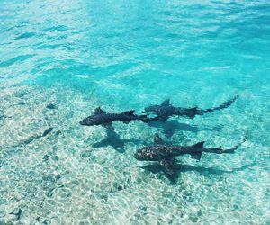 ocean, shark, and animal image
