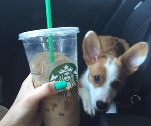 coffee, dog, and pets image