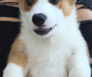 cute, dogs, and puppy image