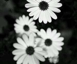 flowers, black and white, and wallpaper image